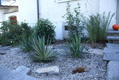 Bepflanzung Mit Winterharten Mediterranen Pflanzen: Verschiedene Yuccas,  Glanzmispel Und Mittelmeer Schneeball
